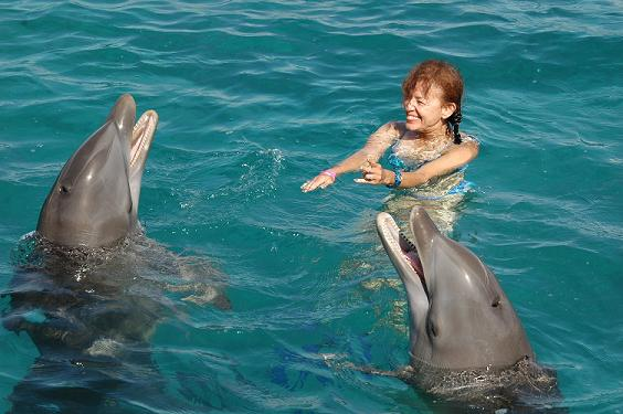 Swimming With Dolphins c. Lanelli 2006